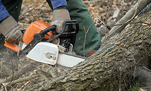 Bucking is the process of cutting the  main trunk of the tree into 12 to 16 inch lengths