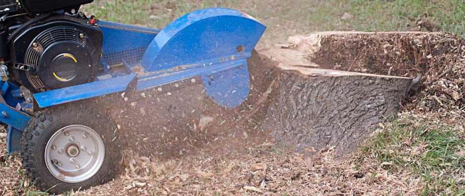 Renting a Stump Grinder