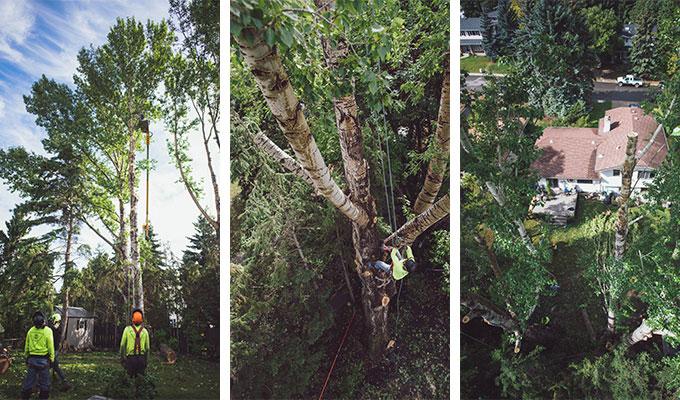 Unpopular Poplars